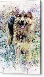 Acrylic Print featuring the photograph Soft Shaggy Love by Dorothy Berry-Lound