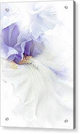 Softness Of A Lavender Iris Flower Acrylic Print