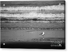 Acrylic Print featuring the photograph Solo by Jeni Gray