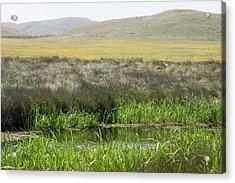 Sonoma Coast_ Al_530_18 Acrylic Print