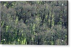 Sonoma Valley Rp_1310_18 Acrylic Print