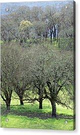 Sonoma Valley Rp_1439_18 Acrylic Print