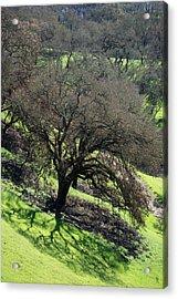 Sonoma Valley Rp_oak_1333_18 Acrylic Print
