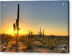Sonoran Desert Catching Days Last Rays Acrylic Print