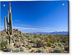 Sonoran Desert Landscape In Scottsdale Acrylic Print
