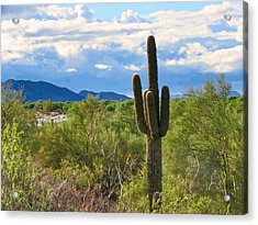 Acrylic Print featuring the photograph Sonoran Desert Landscape Post-monsoon by Judy Kennedy