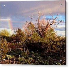 Sonoran Desert Spring Rainbow Acrylic Print