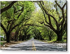 South Boundary Ave Aiken Sc Acrylic Print
