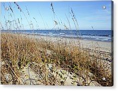 South Carolina Beach Dunes Acrylic Print