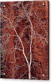 Southwest Texture Acrylic Print by Leland D Howard