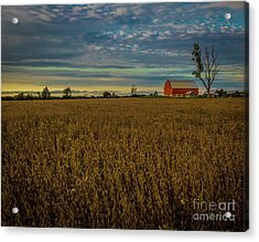 Soybean Sunset Acrylic Print