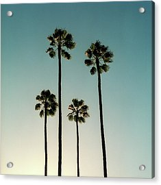 Spain, Sevilla, Palms Swaying In The Acrylic Print