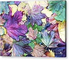 Special Colored Autumn Leaves Acrylic Print