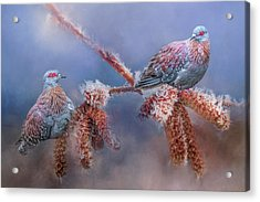 Speckled Pigeons Acrylic Print