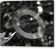 Spinning My Web Acrylic Print