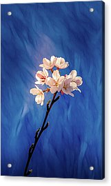 Acrylic Print featuring the photograph Spring Color #1 by Allin Sorenson