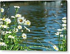 Spring Daisy Acrylic Print