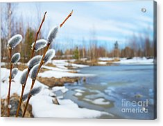 Spring Landscape With Willow Branches Acrylic Print