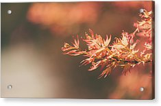 Spring Or Fall Acrylic Print