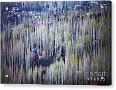 Spring Strokes Acrylic Print