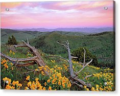 Spring Sunset Acrylic Print by Leland D Howard