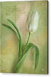 Spring Tulip Montage Acrylic Print