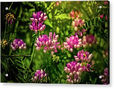 Acrylic Print featuring the photograph Spring Wildflowers by Allin Sorenson
