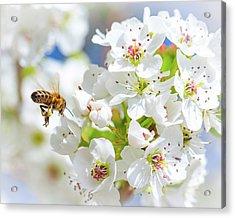 Springtime Buzz Acrylic Print