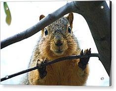 Spying Fox Squirrel Acrylic Print