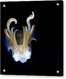 Squid At Night Acrylic Print