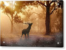 Stag In The Forest Acrylic Print