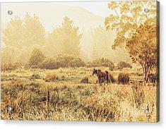 Stallion Homestead Acrylic Print