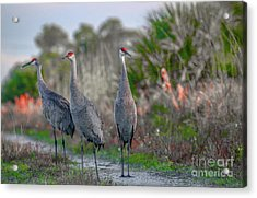 Acrylic Print featuring the photograph Standing Sandhills by Tom Claud