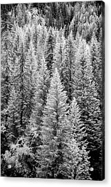 Standing Tall In The French Alps Acrylic Print