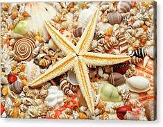 Starfish And Assorted Seashells Acrylic Print by Imagemore Co.,ltd.