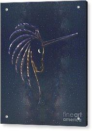 Star Unicorn Acrylic Print