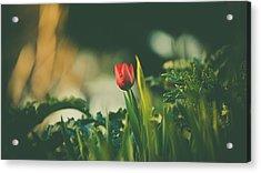 Start Of Spring Acrylic Print