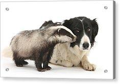 Acrylic Print featuring the photograph Stop Badgering Me by Warren Photographic