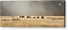 Stormy Skies Over The Masai Mara With Elephants And Zebras Acrylic Print