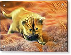 Striped Forehead Kitten Acrylic Print