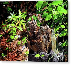 Acrylic Print featuring the photograph Stumped On Assateague Island by Bill Swartwout Fine Art Photography