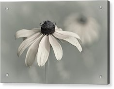 Acrylic Print featuring the photograph Subtle Glimpse by Dale Kincaid