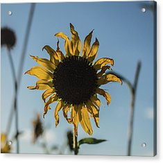 Summer Afternoon Acrylic Print