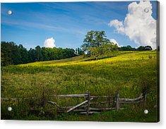 Blue Ridge Parkway - Summer Fields Of Yellow - Lone Tree Acrylic Print