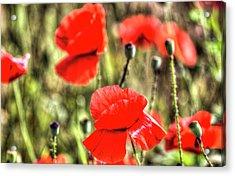 Summer Poppy's  Acrylic Print