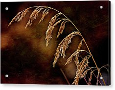 Acrylic Print featuring the photograph Summer's Passed by Fred Denner