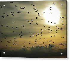 Sun Flock Acrylic Print