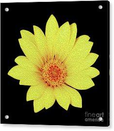 Acrylic Print featuring the digital art Sun Flower by Kenneth Montgomery
