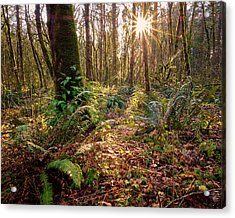 Acrylic Print featuring the photograph Sun Star In Tryon Creek State Park by Whitney Goodey