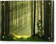 Sunbeams Breaking Through Pine Tree Acrylic Print by Avtg